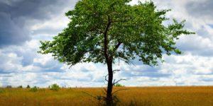 """La doctrina del """"árbol envenenado"""" fue acuñada por el Tribunal Supremo de los Estados Unidos en 1920. El Tribunal Constitucional español la consagró en 1984 merced a la STC 114/1874."""