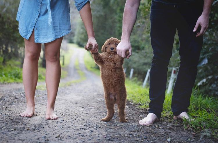 Nos divorciamos, ¿quién se queda con el perro, tú o yo?